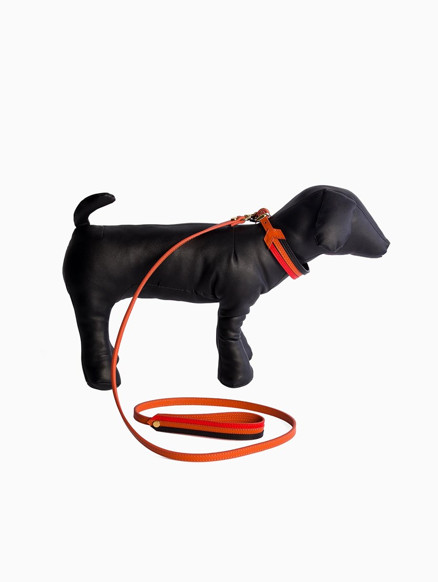 Baba Paris Trio Collar Leash