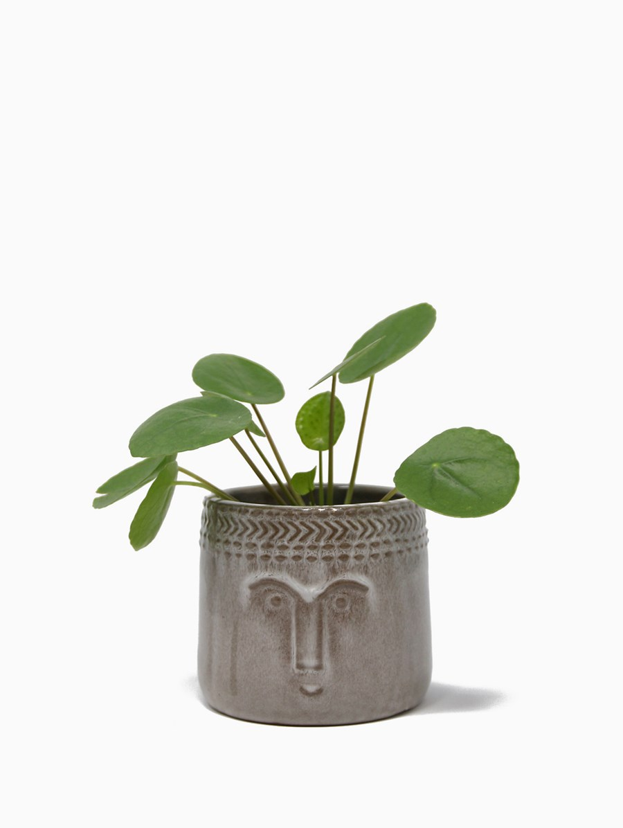 Müz Happy Pot Baby Pilea